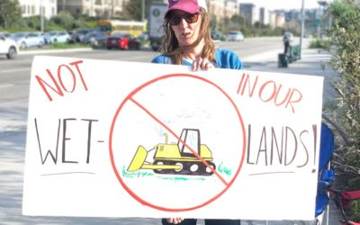 Pacific Palisades Democratic Club Agrees: Do NOT Bulldoze Ballona Wetlands!